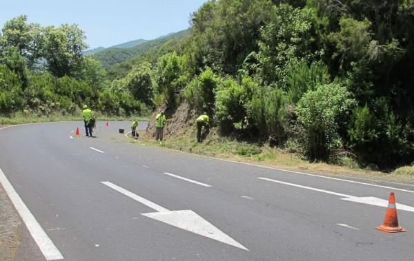 09.07.15 Limpieza y Podas Carreteras (1)